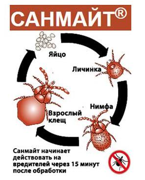 САНМАЙТ